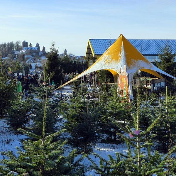 Fürs Weihnachtsfest Een Baum Aus Sachsen